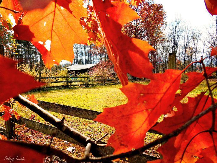 Autumn Beauty by betsy bush http://www.greetingcarduniverse.com/dragonfiregraphics