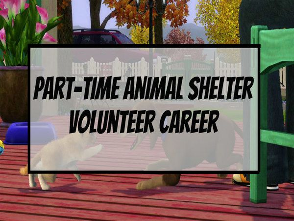 Part Time Animal Shelter Volunteer Career Dreadmermaid Animal