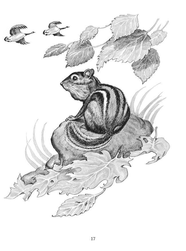 caldecott award coloring pages   17 Best images about Chipmunks on Pinterest   Little ...