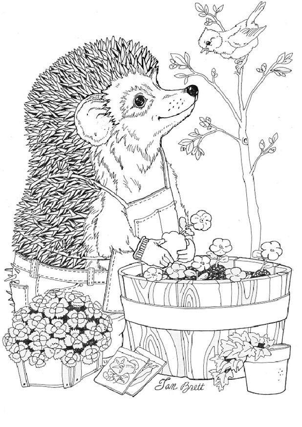 egel - voorjaar - lente 3