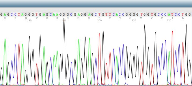 Researchers encode malware in DNA compromise DNA sequencing software