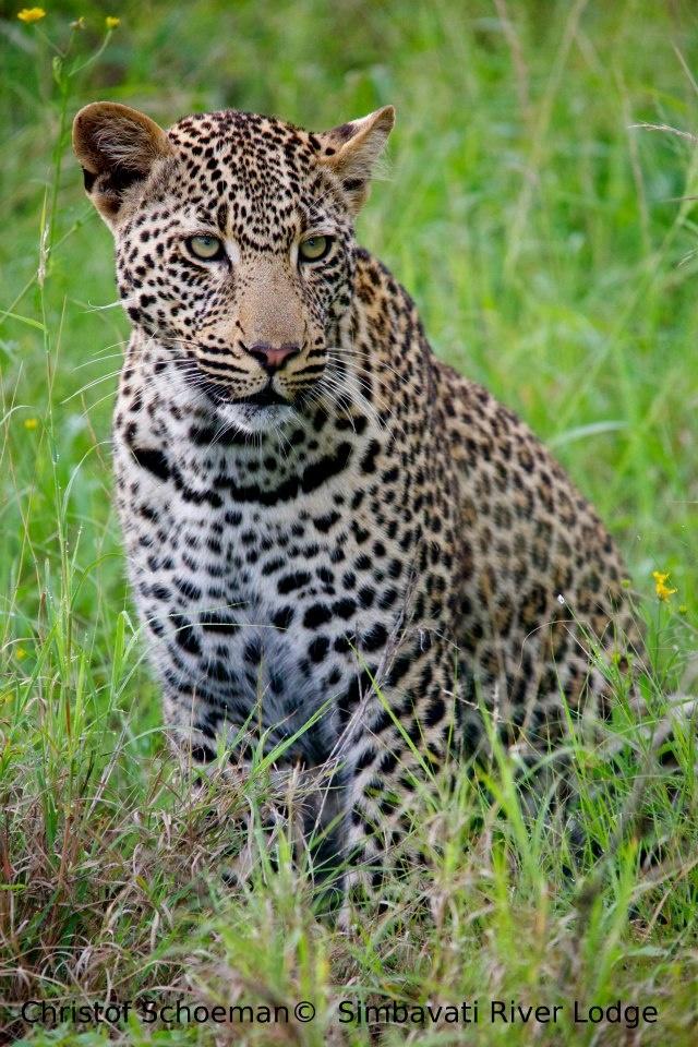 Christof Schoeman Wildlife Photography