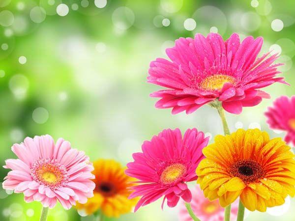 Цветы : 2054