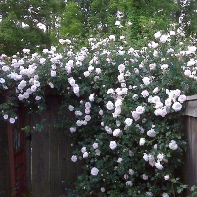 17 Best Images About Garage Wall Garden Idea On Pinterest