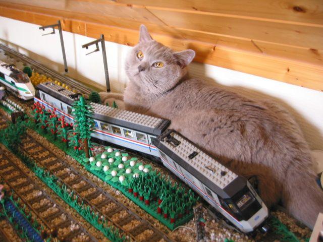 Katzen Trainieren