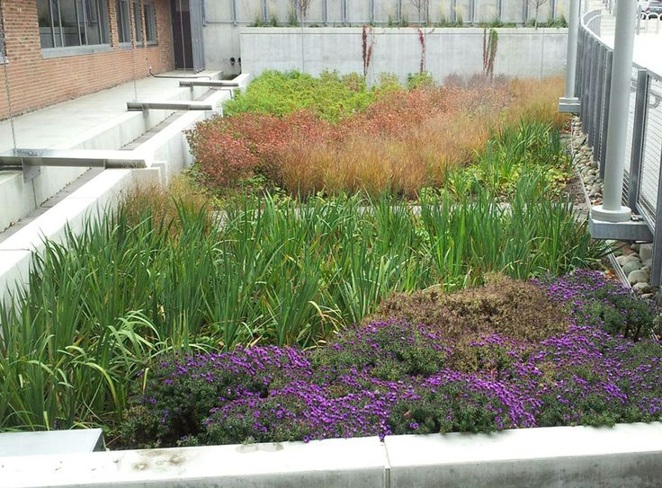 473 best rain gardens images on pinterest rain garden for Rain garden design