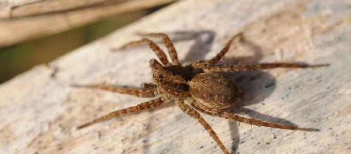 Se débarrasser des araignées : Quelques solutions naturelles