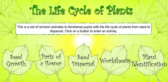 interactive life cycle of plants