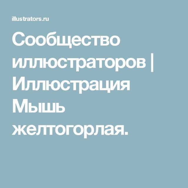 Сообщество иллюстраторов   Иллюстрация Мышь желтогорлая.