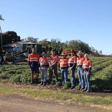 We have a dedicated team in Bundaberg who make sure our sweet potato operations run smoothly. Our sweet potato farms are located in Queensland's bountiful Bundaberg region. #sweetpotato #aussiefarming #farming #bundaberg #queensland #carterandspencer