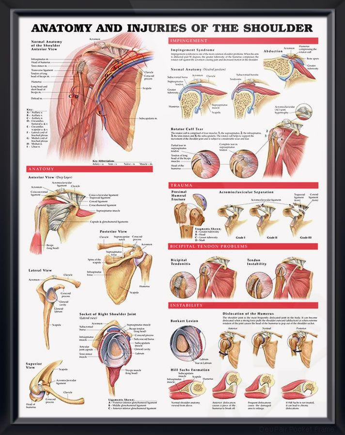 Anatomy and Injuries of the Shoulder poster shows views of the shoulder anatomy, impingement, rotator cuff tear, trauma and bicipital tendon. #clinicalposters