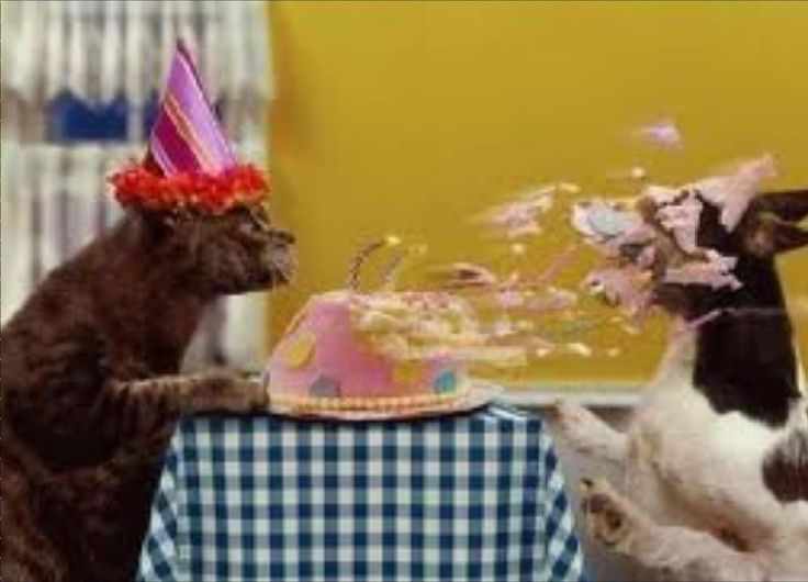 Bildergebnis für HAPPY BIRTHDAY ANIMALS SAYINGS IMAGES
