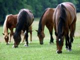 Caballos Pura SangreEmpowering Network, Hallways, Horses, Farms, Handmade Flower, Desktop Wallpapers, Blog, Country, Animal