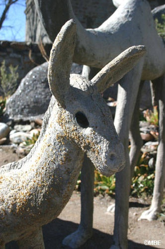The Owl House: Donkeys, Sheep andCamels