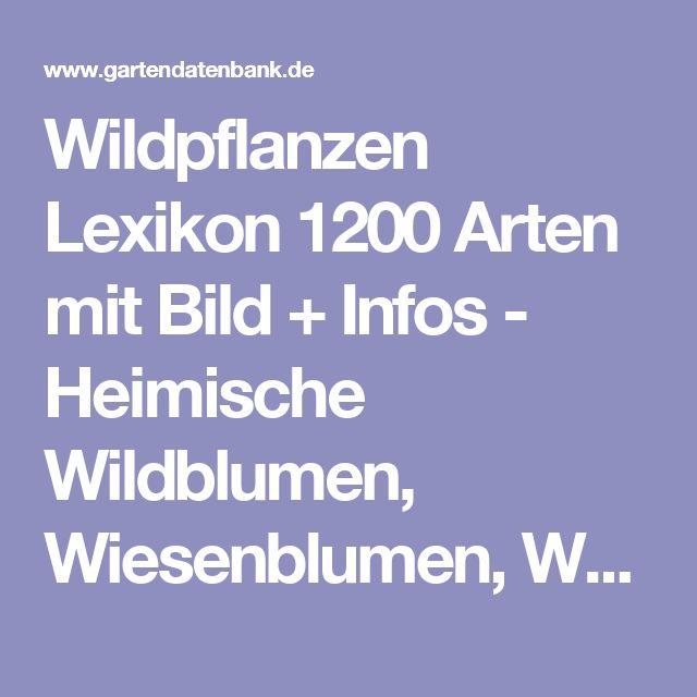 Wildpflanzen Lexikon 1200 Arten mit Bild + Infos - Heimische Wildblumen, Wiesenblumen, Waldblumen, Ruderalpflanzen - Bild mit Infos