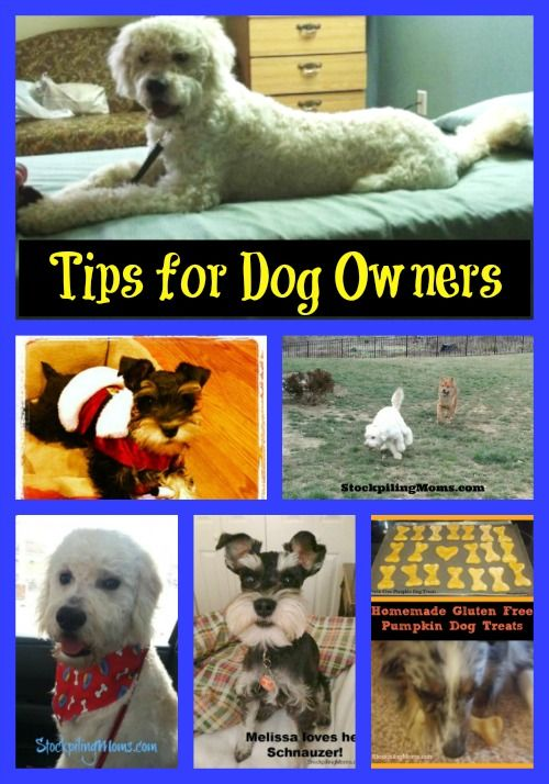 Shy Dog Training Tips
