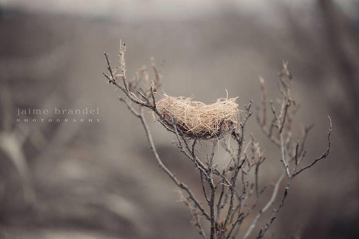Photography print: nest, branches, fine art print, bird nest, wall art, nature photography by JaimeBrandelPhoto on Etsy
