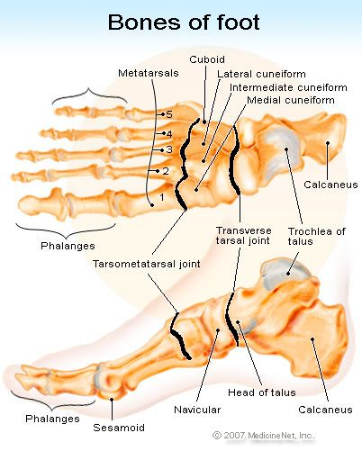 Picture of the Bones in the Foot - Causes of a broken foot,