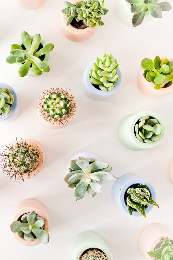 How to make mini planters with pigmented plaster that you can make at home.