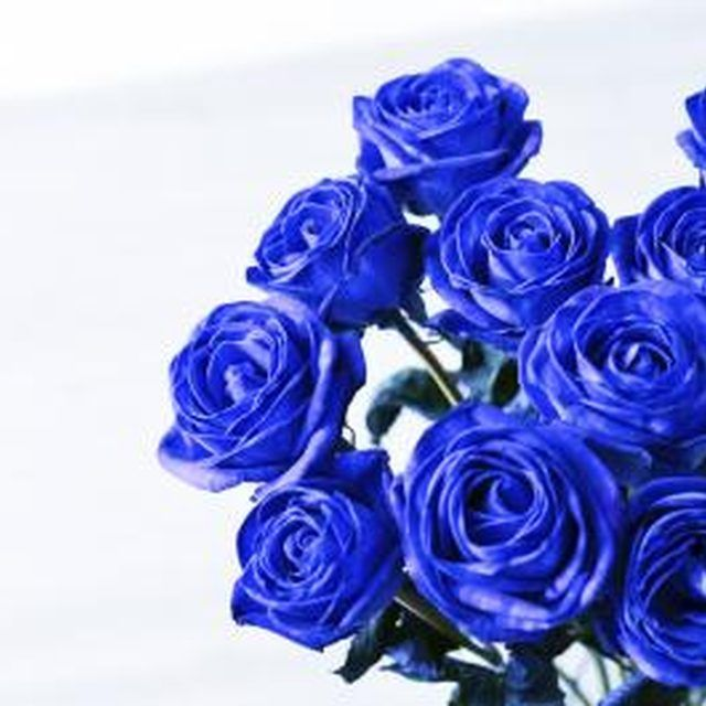 How to dye a white rose a different color colors white for How to dye roses black
