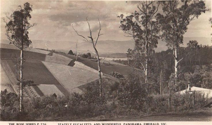 Photograph/postcard - The Rose Series P. 707 'Stately Eucalypts and Wonderful Panorama, Emerald, Vic. - Victorian Collections
