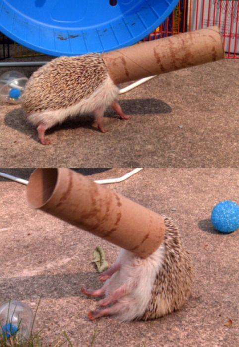 Dude, I sooooo want a pet hedge hog!