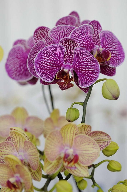 Orchids from the Franschhoek Wine Valley