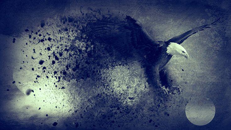 Hintergrundbilder Adler Vögel Tiere