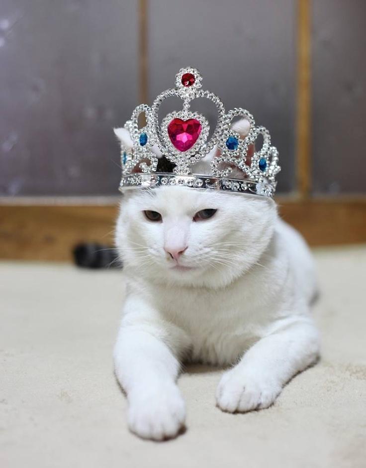 Одевания зимней, смешные королевы с коронами картинки