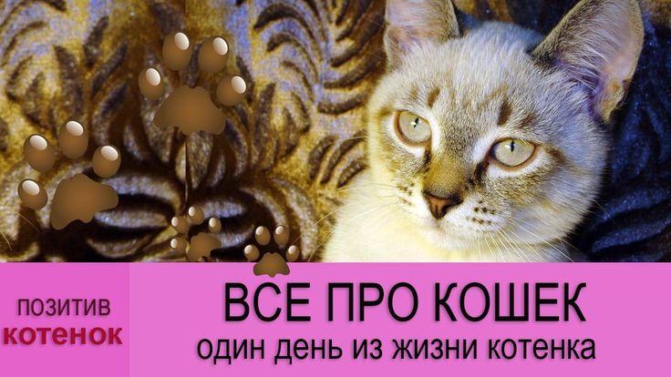 ВСЕ ПРО КОШЕК: Один день из жизни котенка!