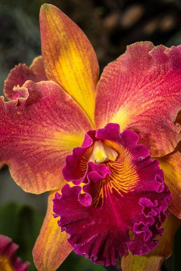 garten pflanzen schöne blumen orchideen