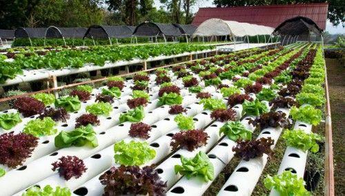 17 mejores im genes sobre hidroponia en casa en pinterest - Jardin hidroponico ...