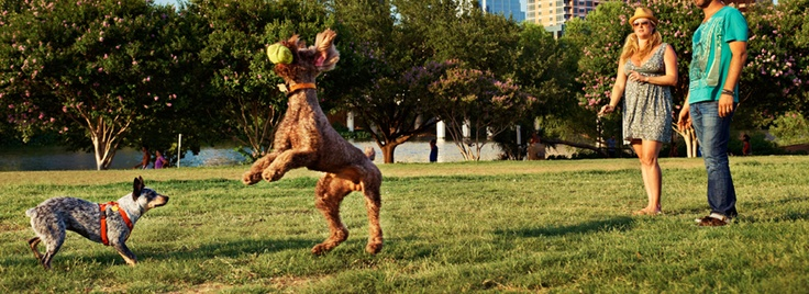 Things to do in Austin, Texas.Ht Group, Group Hq, Austin Texas, Austin Events, Things To Do