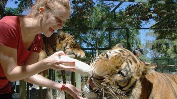 TripAdvisor to stop selling tickets to animal attractions Read more Technology News Here --> http://digitaltechnologynews.com  TripAdvisor is doing the right thing for the animal kingdom.  The travel review site announced Tuesday that its booking service Viator would no longer sell tickets to any attractions where tourists come into physical contact with captive wild animals or endangered species.   SEE ALSO: Uber driver surprises passengers with rescue puppies  The company said the…
