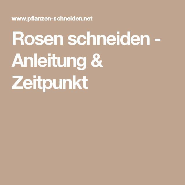 Rosen schneiden - Anleitung & Zeitpunkt