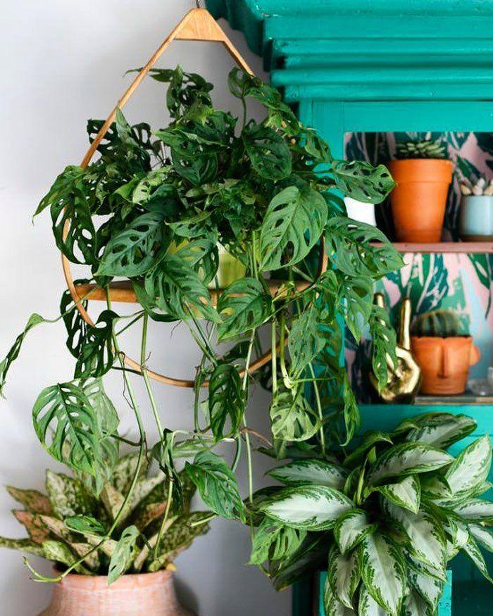 2410 best Indoor plants images on Pinterest Indoor house plants
