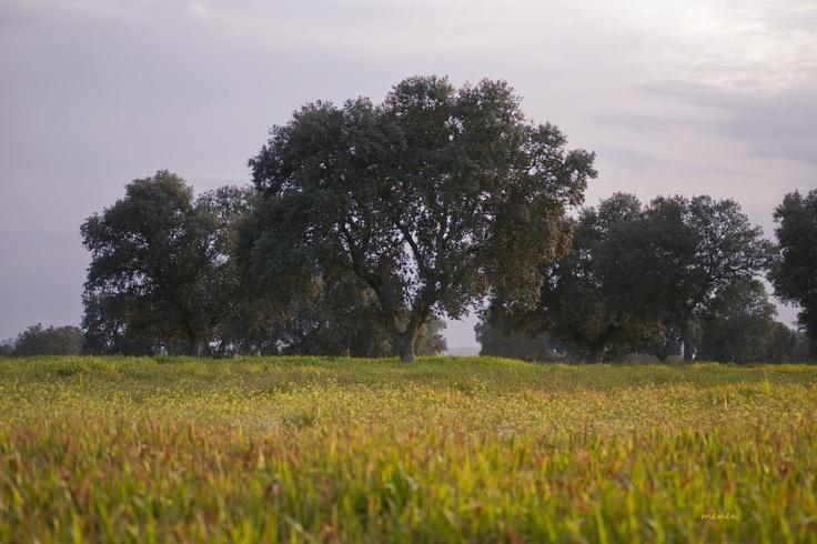 Dehesa del Encinar - Castilla la Mancha (España)