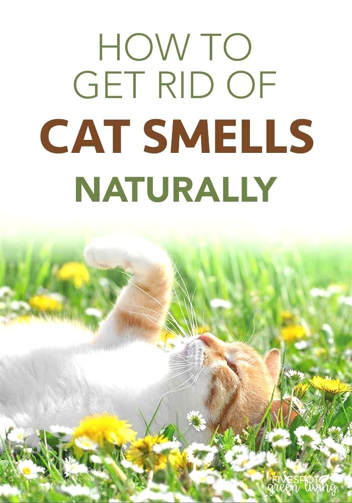 16 Hacks That Will Make You A House Cleaning Genius Cat Urine Remover Natural Cleaning Products Remove Cat Urine Smell
