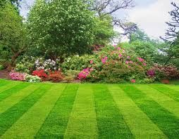 Image result for nz lawns and gardens