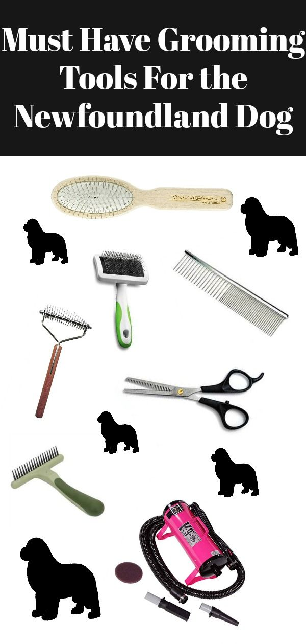 Grooming Tools For The Newfoundland Dog My Brown Newfies