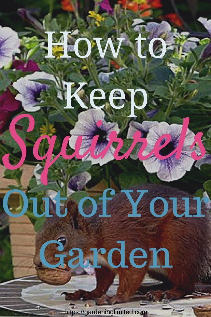 Tired of squirrels ruining your garden? Get some tips on how to keep squirrels out of your garden in this post. #squirrel #gardeningtips