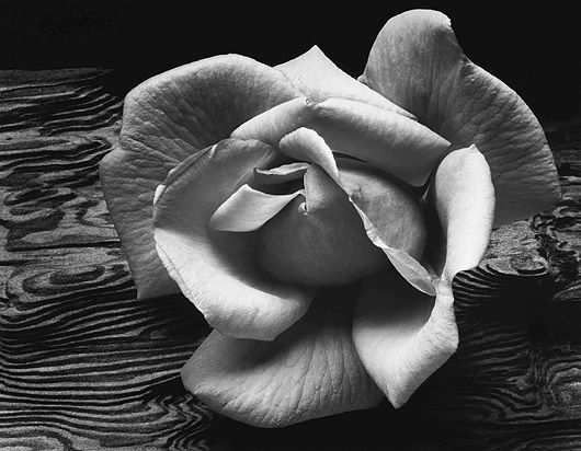 Ansel Adams, Rose and Driftwood, San Franciso, California, c. 1932 love the lines in the wood, actually have this photo in my bedroom:)
