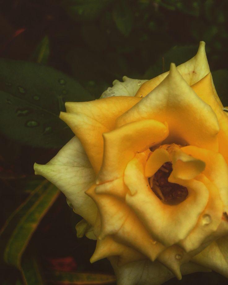 Beauty like a gold..