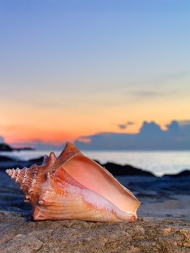 Conch Shell - Nassau, Bahamas