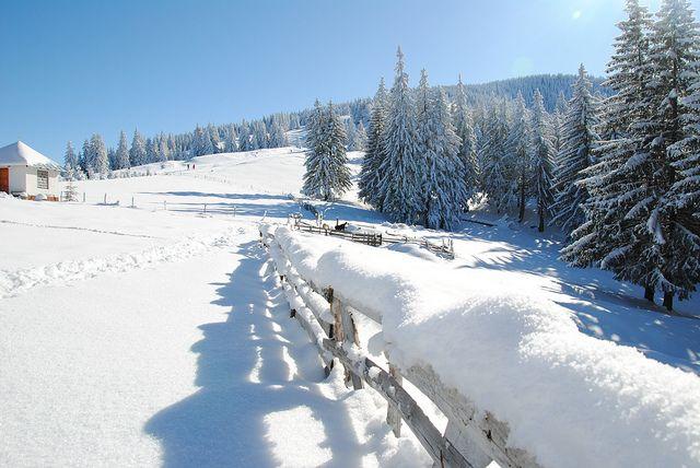 Close to Diham chalet coming from Malaiesti. Carpathians, Romania