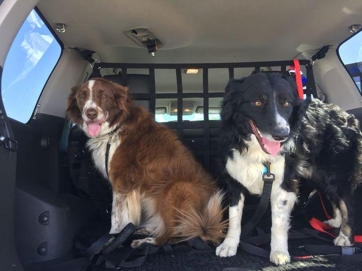 #RAINGLERNETS #DOGS ready to roll out! www.raingler.com