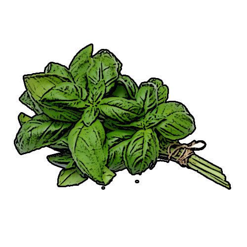 Basil Essential Oil♥100% Pure,  Natural♥50ml for Aromatherapy,burner,soapmaking.