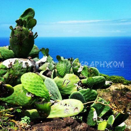 Cactus Overlook