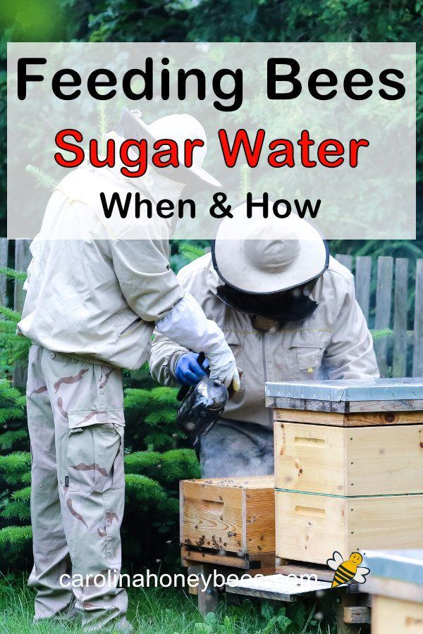 Feeding Bees Sugar Water How Why Carolina Honeybees In 2020 Feeding Bees Sugar Water For Bees Water For Bees