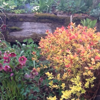 The bank outside the back door is a mass of colour and texture